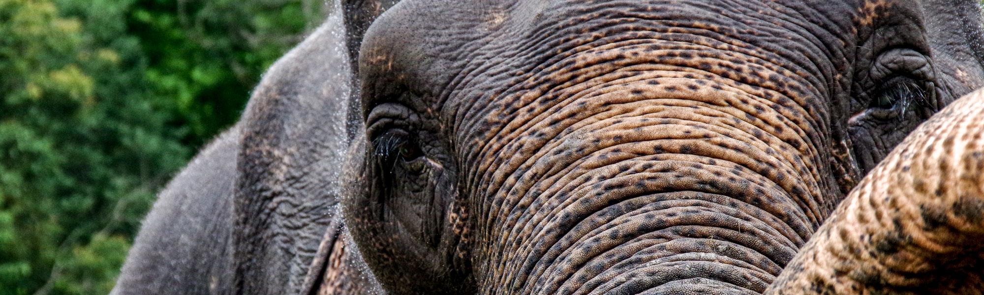 Chiang Mai fil diyarında iki gün